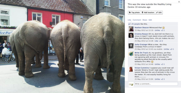 Elephants At Healthy Living Centre Athy