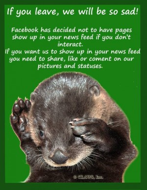 Facebook News Feed EdgeRank Interact